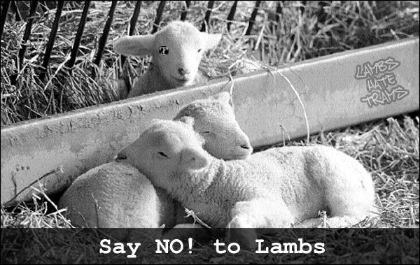say NO! to lambs